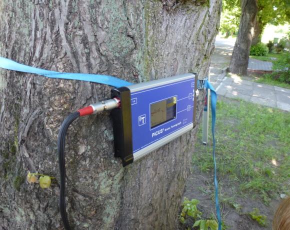 Specjalistyczne badanie drzewa za pomocą tomografu akustycznego Picus.