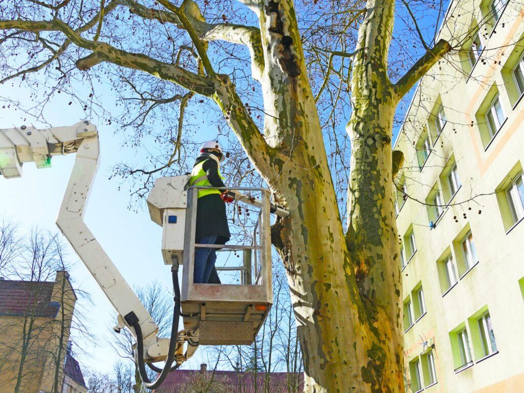 rezystograf oporowy, ekspertyza dendrologiczna, badanie drzew