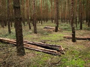 14.Pozyskanie drewna